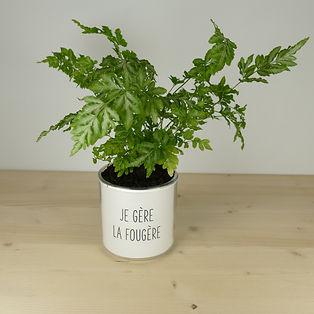 Pot pour plante je gère la fougère