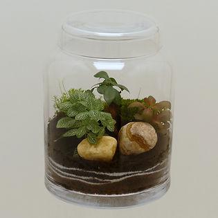 terrarium de plantes avec couvercle verre