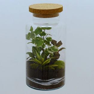 terrarium plantes Paris cadeau zen