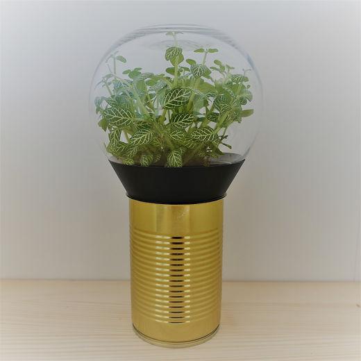 terrarium de plante original en forme d'ampoule électrique