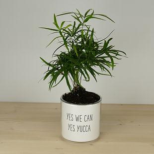 Offrez une plante avec message humoristique sur son pot
