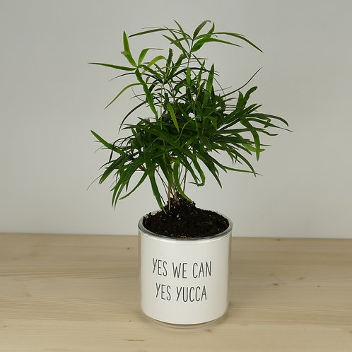 """Pot """"Yes we can yes yucca"""" + Plante"""