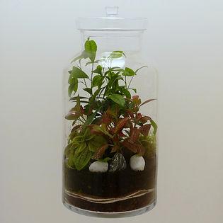 terrarium de plantes format XL