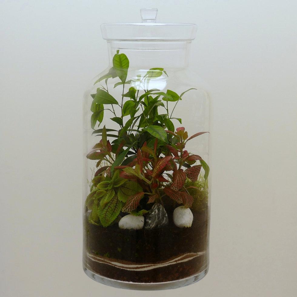 terrarium plantes Paris maxi format XL