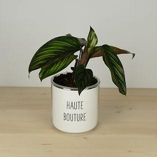 Pot pour plante haute bouture