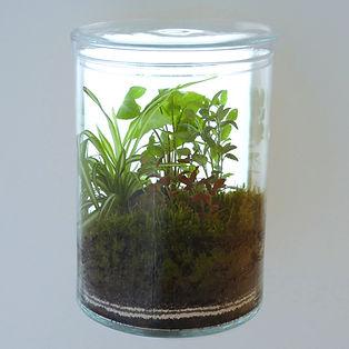 terrarium plantes avec dos lumineux