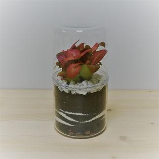 terrarium de plante cylindrique épuré avec fittonia rosé