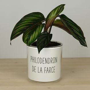 Pot pour plante philodendron de la farce