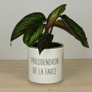 PHILODENDRON DE LA FARCE