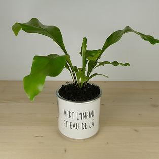 Pot pour plante vert l'infini et eau de là