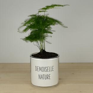 Pot pour plante demoiselle nature