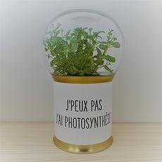 un cadeau végétal déco, perso et éco : un terrarium à message Green Cocoon