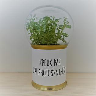 terrarium original et pas cher socle doré et imprimé j'peux pas j'ai photosynthèse + cloche verre