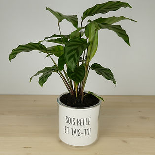 Pot pour plante sois belle et tais-toi