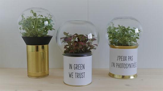 terrariums de plante inédits