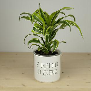 Pot pour plante et un et deux et végétaux