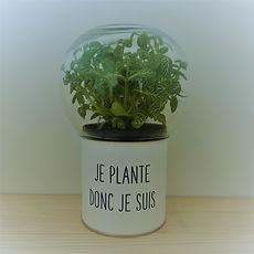 offrez une plante et un sourire avec un terrarium à message Green Cocoon à 29€