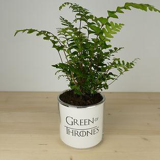 Pot pour plante green of thrones