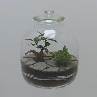 terrarium plantes semblent avoir poussé entre des pavés