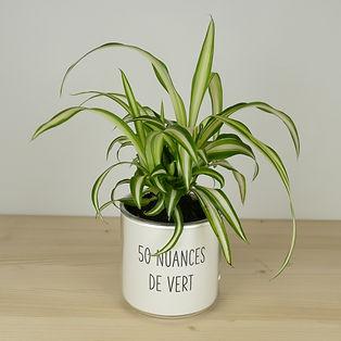 Pot pour plante 50 nuances de vert