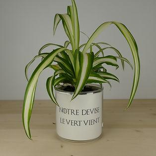 Pot pour plante notre devise le vert vient