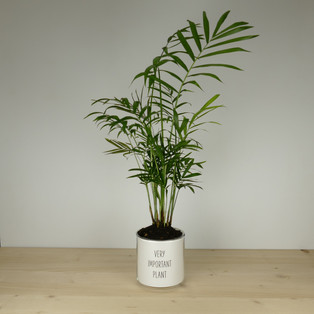 VERY IMPORTANT PLANT