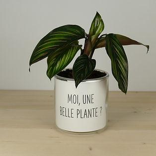 Pot pour plante moi une belle plante