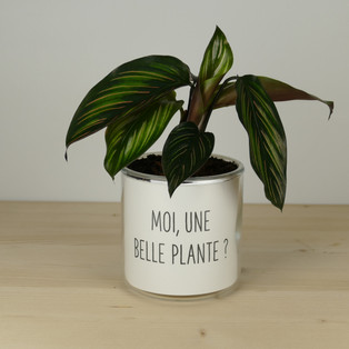MOI, UNE BELLE PLANTE ?