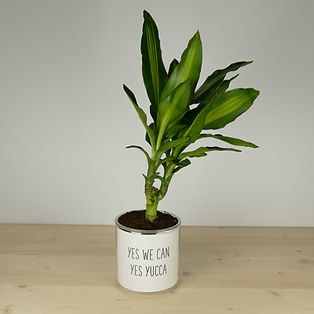 Pot pour plante yes we can yes yucca