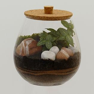 terrarium de plante avec couvercle liège original