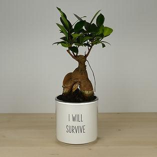 Pot pour plante I will survive