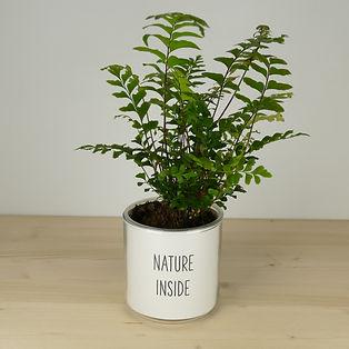 Pot pour plante nature inside