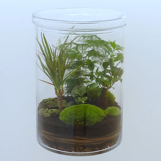 terrarium plantes maxi format XXL Paris