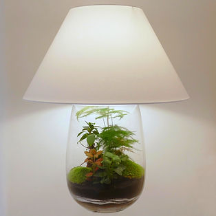 lampe de table lampe de salon terrarium plantes déco décoration lampeterrariumdéco lampeterrariumdécoration Paris