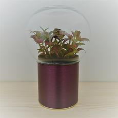 terrarium de plante original, déco et éco !!