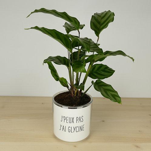 """Pot """"J'peux pas j'ai glycine"""" + Plante"""