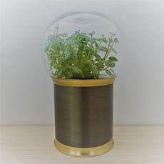 terrarium de plante grans effets petit prix