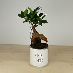Pot pour plante à plus l'ficus