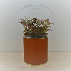 terrarium original et pas cher socle aspect cuir et globe verre