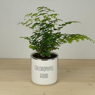 Pot pour plante chlorophyll good