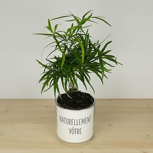 Pot pour plante naturellement vôtre