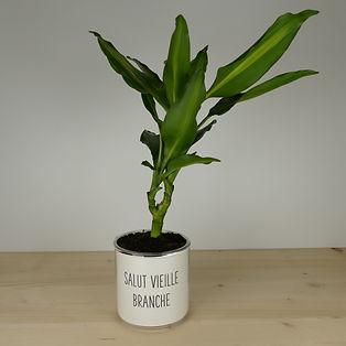 Pot pour plante salut vieille branche
