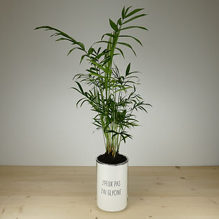 Pot pour plante j'peux pas j'ai glycine