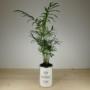 Pot pour plante very important plant
