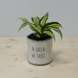 Pot pour plante in green we trust
