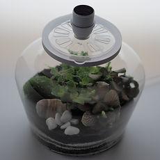 lampe terrarium plantes Paris moduler l'aération gérer la condensation innovation