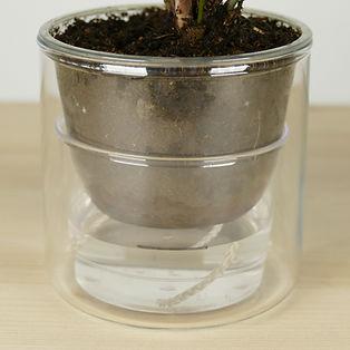 Le plus petit pot à réserve d'eau du monde