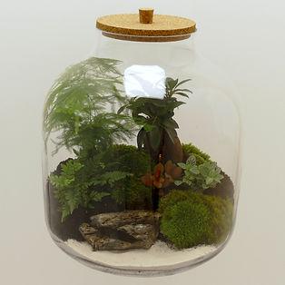terrarium plantes Paris maxi format plage