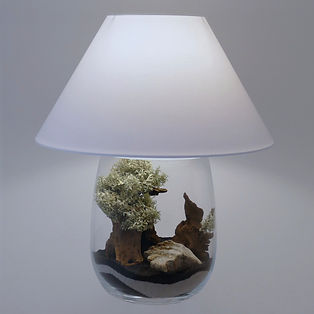 lampe de salon terrarium bois flotté roche lichen aucun entretien Paris
