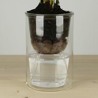 Des petits pots pour plantes à grande réserve d'eau